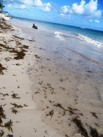 Ocean Blue Sand Beach With Seaweed