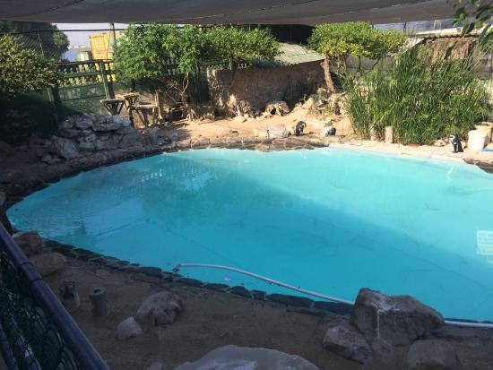 Sanccob Western Cape - Penguin Rehabilitation Center: Zwembad home-pen