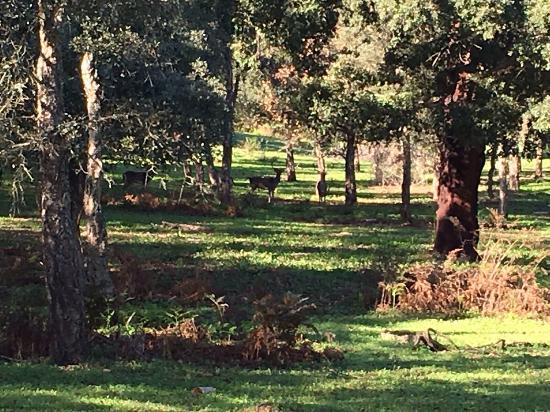 La Almoraima : photo0.jpg