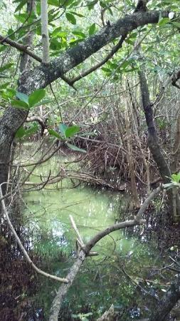 Florida Oceanographic Coastal Center : Nature Trails