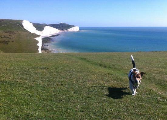 Seaford, UK: Paws for thought on the Seven Sisters
