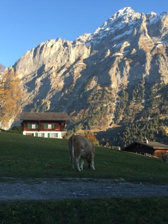 Hotel Alpenhof Grindelwald: photo1.jpg