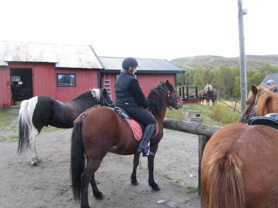 Коммуна Холь, Норвегия: de pony,s