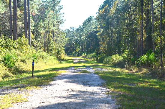 Green Cove Springs, FL: Bayard Conservation Center - the hiking trail