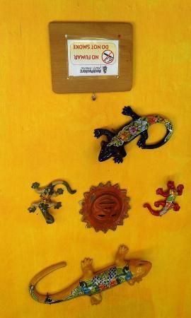 Rossco Backpackers Hostel : iguanas