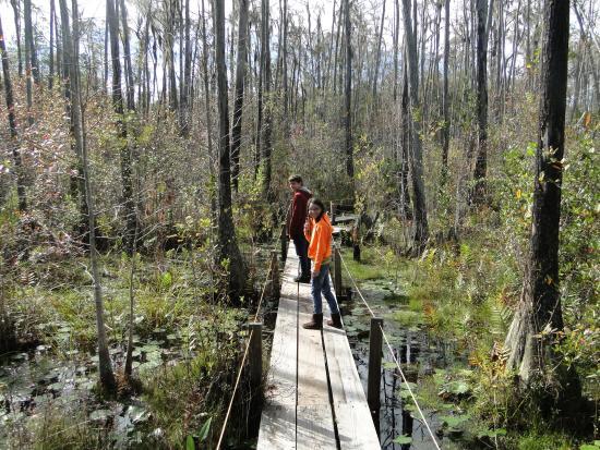 Okefenokee Swamp Park Boardwalk to ob...