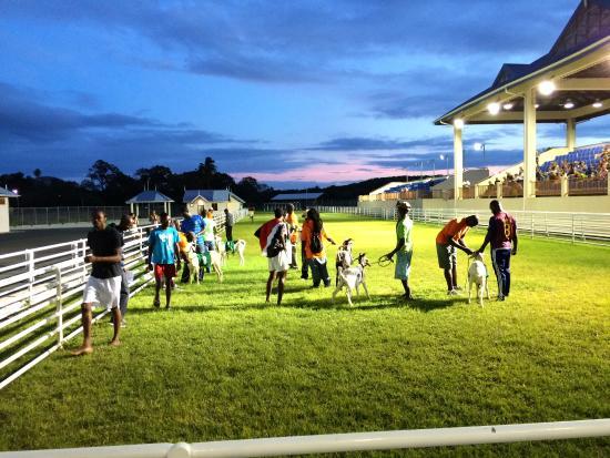 Goat Race Stadium