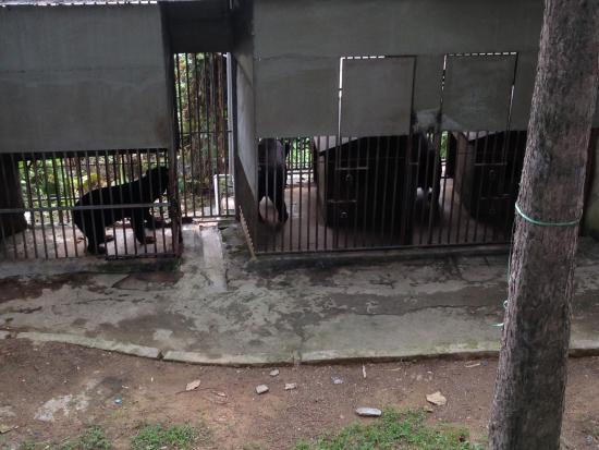 Panda World: Small enclosures for the Black Bear.