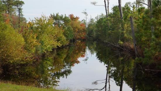 Manteo, Βόρεια Καρολίνα: Alligator River NC: Plenty of wildlife and interesting vegetation