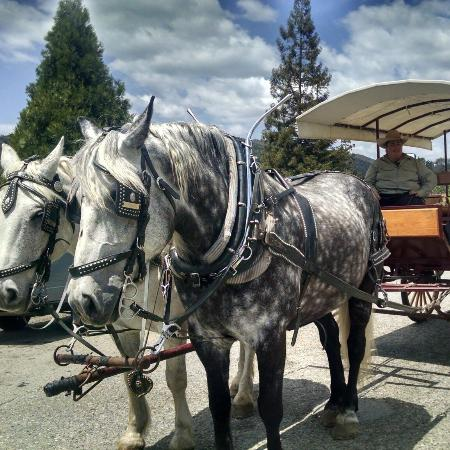 Real Stagecoach Rides in Mariposa!!!
