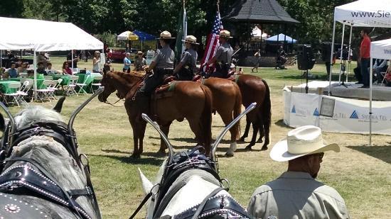 Mariposa, CA: Beautiful Horses!
