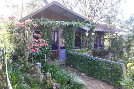 Pine Hill Homestay Lodge Dalat