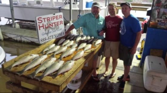 Pottsboro, TX: Lake-Texoma-Striped-Bass