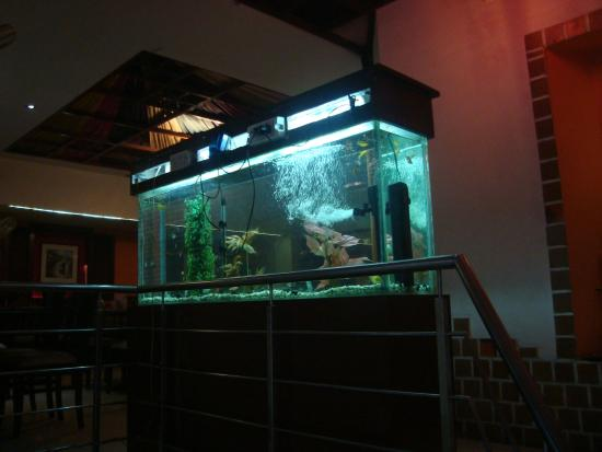 Flaming Wok : Acquarium at the head of the stairs