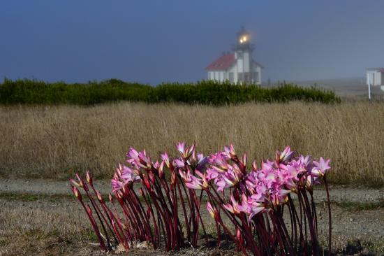 Agate Cove Inn: Point Cabrillo Lighthouse down the road