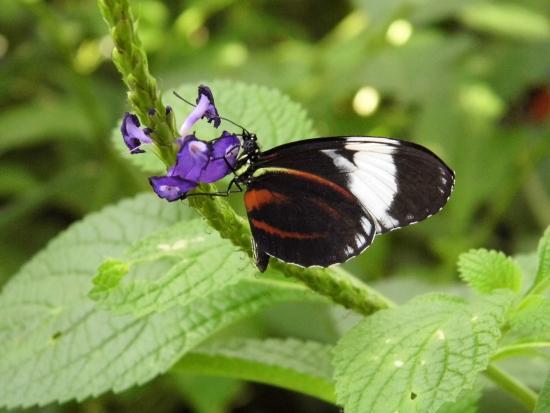 Coupon butterfly wonderland scottsdale