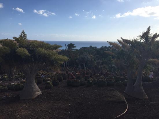 20151205_135711_large.jpg - Picture of Oasis Park Fuerteventura, Fuerteventur...