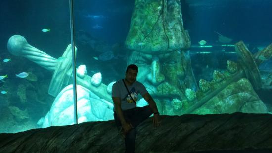 Istanbul Aquarium - Picture of Istanbul Aquarium, Istanbul ...