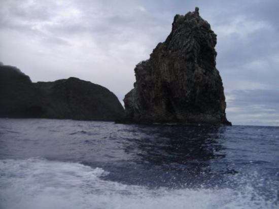 Tea Nui - Cabanas y Habitaciones : xxxx