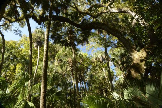 Sebring, FL: Ancient Hammock Trail, Highlands Hammock