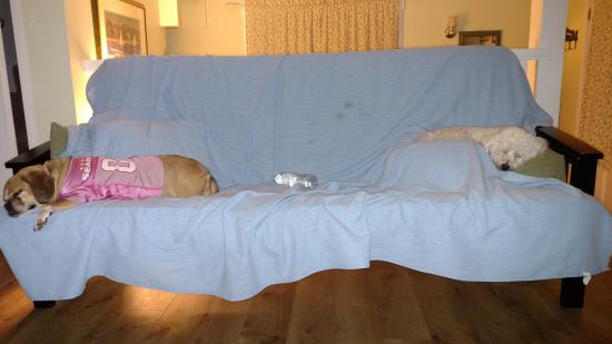 Eastsound, واشنطن: Fur babies on covered futon