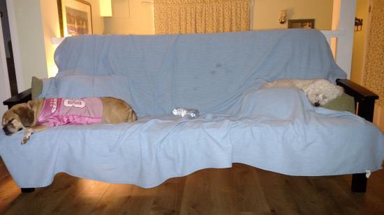Eastsound, WA: Fur babies on covered futon