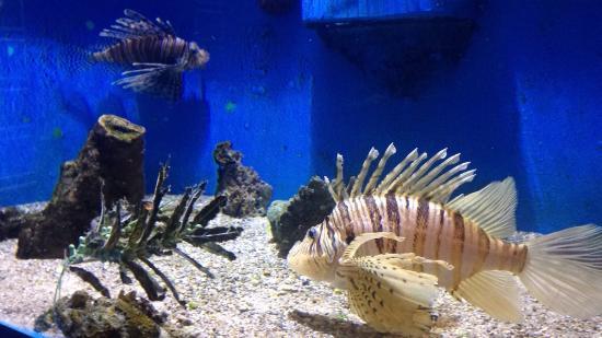 写真Woods Hole Aquarium枚