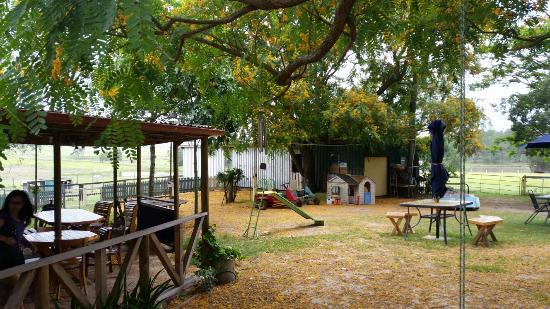 Beaudesert, Australia: 20151125_073918 (1)_large.jpg