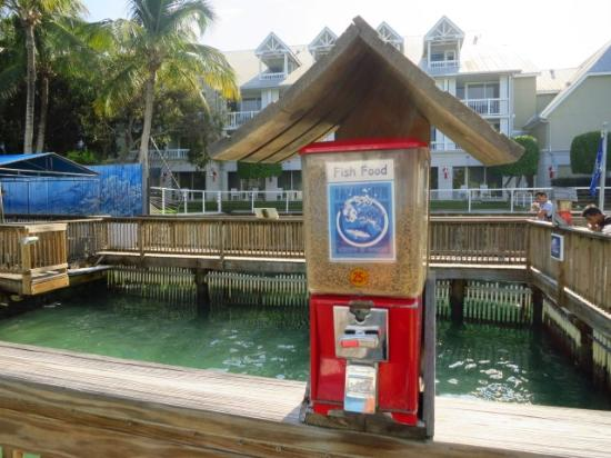 Tiburones Picture Of Key West Aquarium Key West Tripadvisor