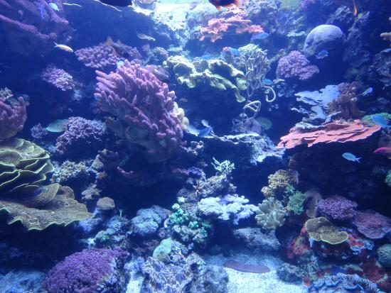 Corals Picture Of Aquarium Of The Pacific Long Beach