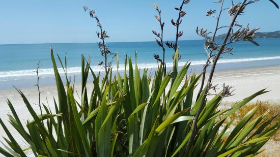 Isla Waiheke, Nueva Zelanda: Onetangi Beach stop between wineries