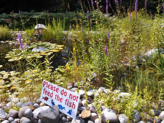 Prudenville, MI: Tiki Pond