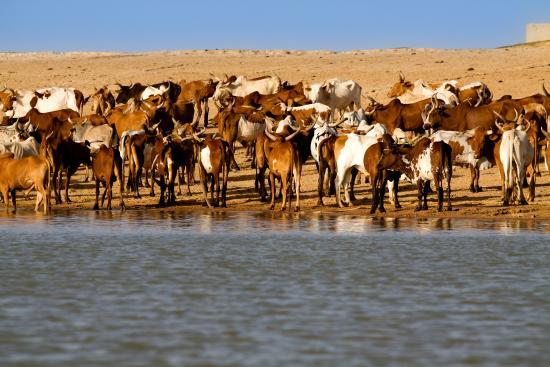 Niger River: lungo il fiume