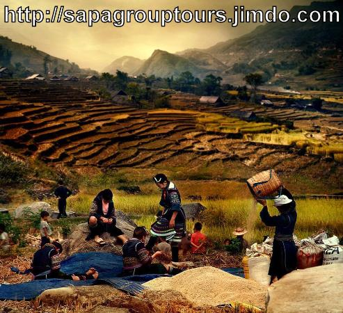 ‪Sapa Tribal Tours‬