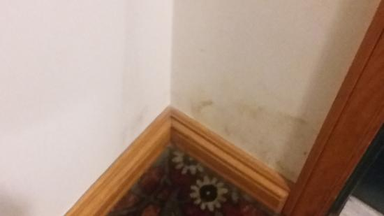 Country Inn & Suites By Carlson, Detroit Lakes: Mold spot they tried to wipe off, it was in several places like this