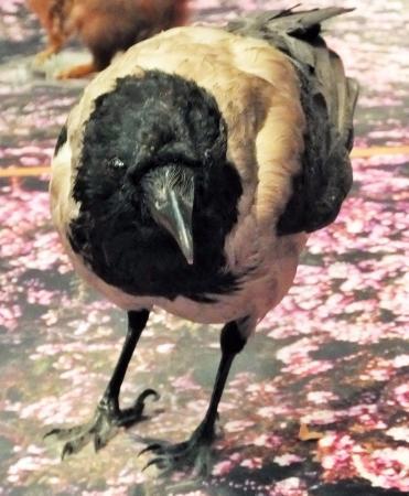 Kelvingrove Art Gallery and Museum: bird  display
