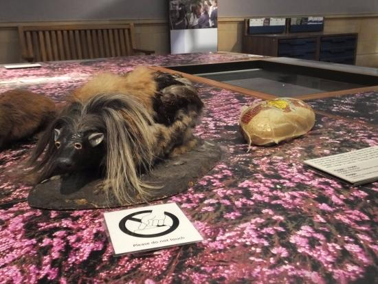 Kelvingrove Art Gallery and Museum: Wild Haggis