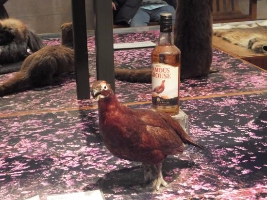 Kelvingrove Art Gallery and Museum: bird collection