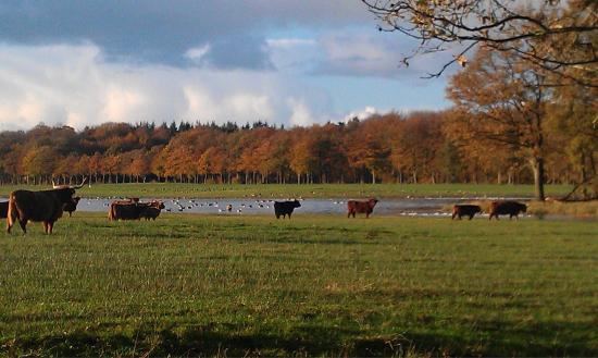 National Park Drents-Friese Wold: photo0.jpg