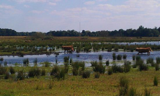 National Park Drents-Friese Wold: photo2.jpg