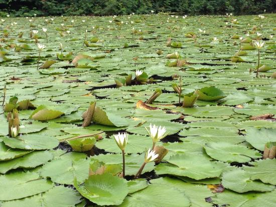 Гранада, Никарагуа: Vegetación 03