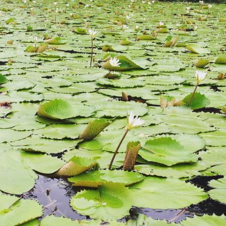 Гранада, Никарагуа: Vegetación 02