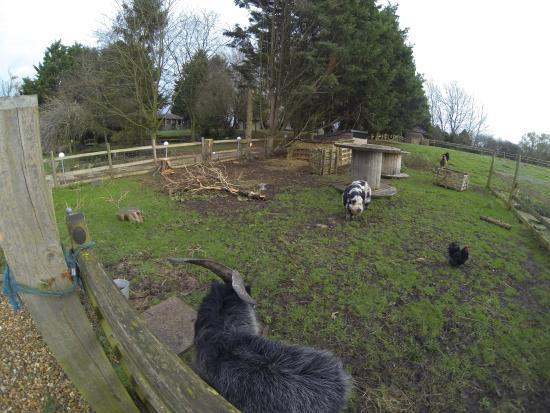 Antonia House Bed & Breakfast: Antonia House garden and paddock