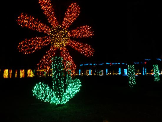 Silverton, Орегон: Christmas lights in the garden's Conifer Forest