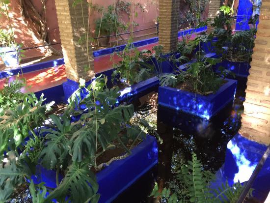 le bleu majorelle picture of jardin majorelle marrakech