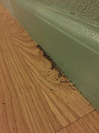 Haiku, Гавайи: Ants making an ant hill in the living room (happened again after it was vaccuumed)