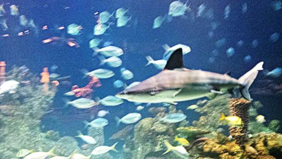 Greensboro, Carolina del Norte: Sharks!