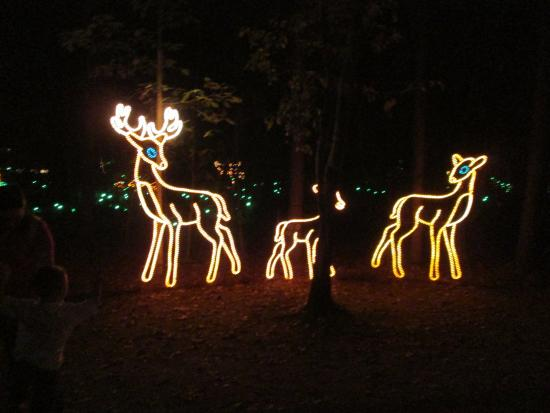 james island county park deer lights