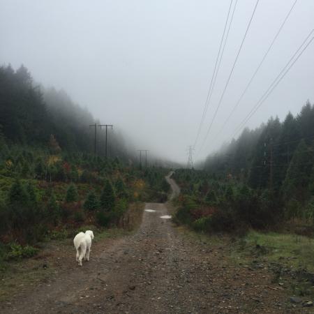 Nanaimo, Kanada: Прогулка вокруг