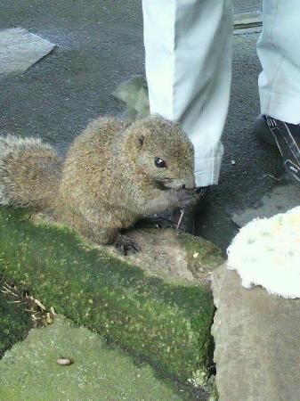 Tsubakihana Garden Squirrel Village : FB_IMG_1448738844002_large.jpg